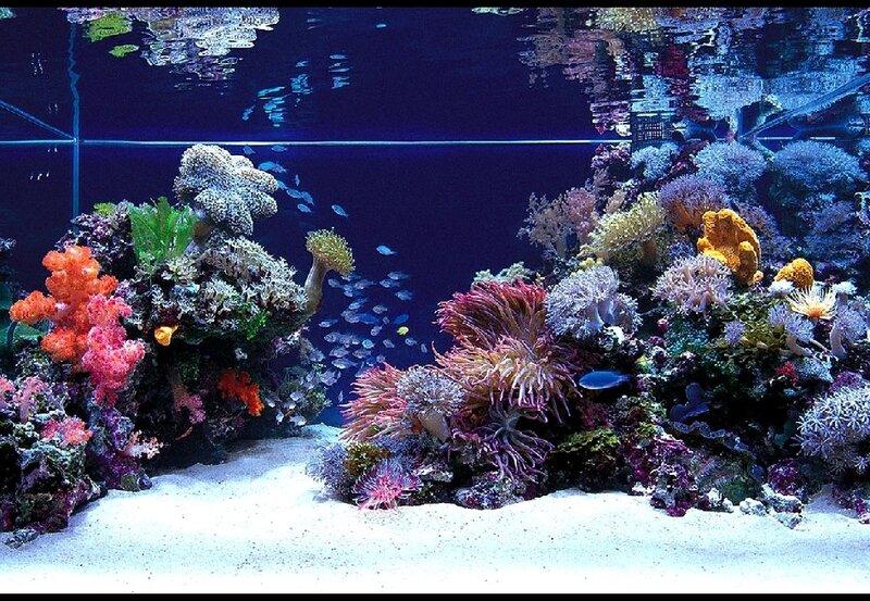 Подводный мир-Kораллы 74827