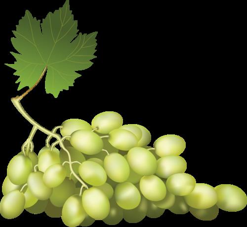 виноград (45).png