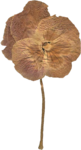 JenU_Flower_DriedAntiquePansie2.png