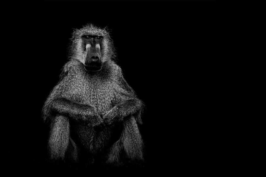 Лукас Холас. Черно белые портреты животных 0 1419d9 c3d54289 orig