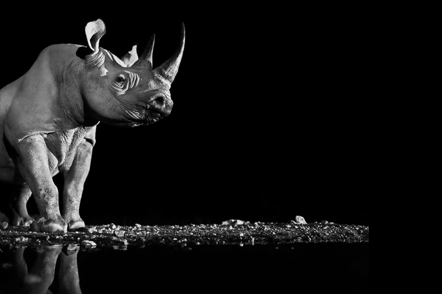 Лукас Холас. Черно белые портреты животных 0 1419df bdf5628 orig