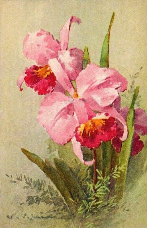 К. Кляйн. Орхидеи.