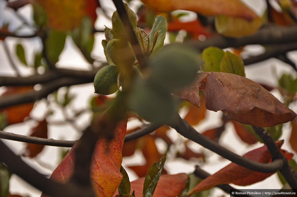 0 168b24 c93c6f06 orig День 192 200. Хардин Ботанико, прощальная вечеринка на крыше в Медельине и перелет в Боготу