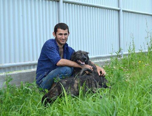 Собаки нюра и нюрята из приюта догпорт