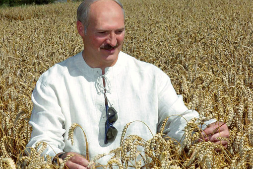 Лукашенко в поле с колосками