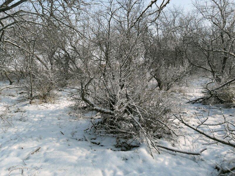 На Ачуевской косе, 12 февраля 2012
