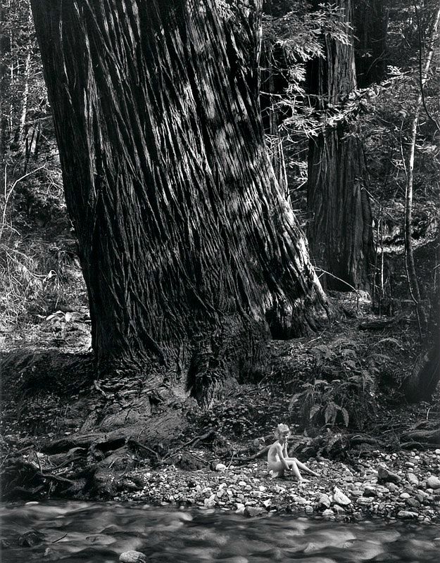 wynn bullock stark tree Artwork title stark tree artist name wynn bullock date created 1956 classification photograph medium gelatin silver print dimensions 7 1/2 in x.
