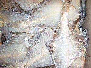 Почти 1000 тонн камбалы добыли рыбаки Сахалинской области с начала года