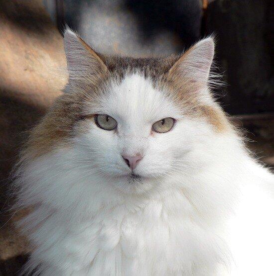 серьёзный кот