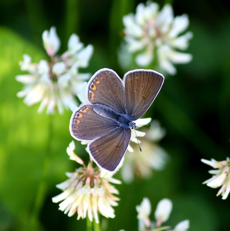 "Схема вышивки  ""Бабочка на клевере "": комментарии."
