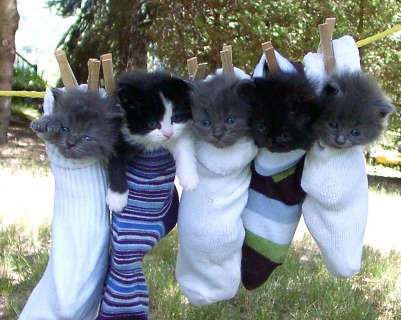 Фото котят прикольные.