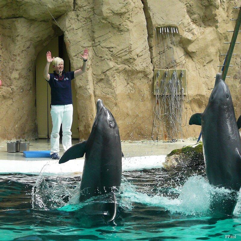 Дельфинариум в Дюйсбургском зоопарке