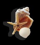 Морское приключение 0_60cc6_8a719299_S