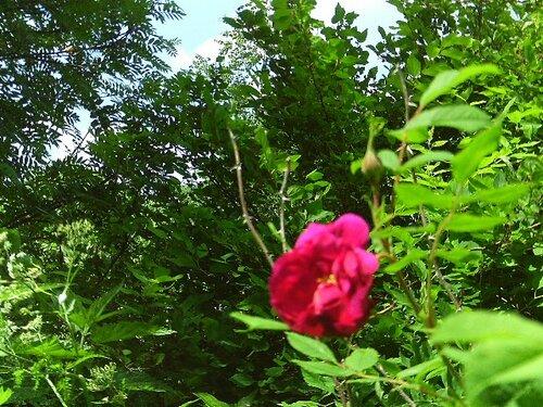 http://img-fotki.yandex.ru/get/5508/verana2011.5/0_61506_66f67239_L.jpg