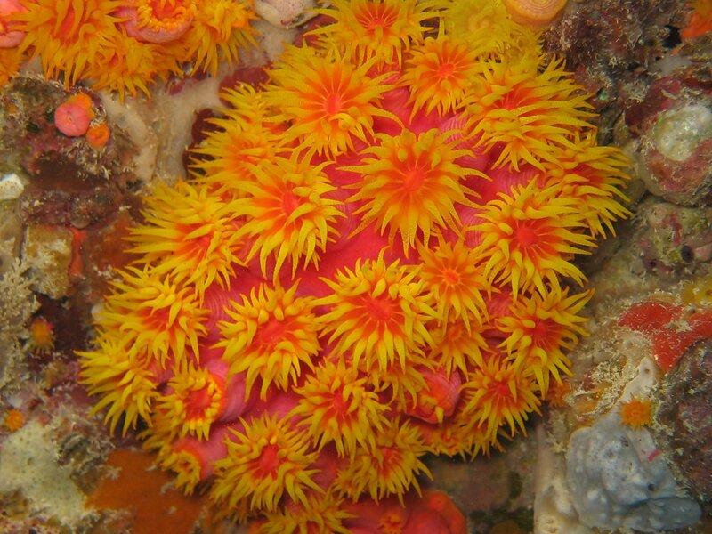 Подводный мир-Kораллы 16621