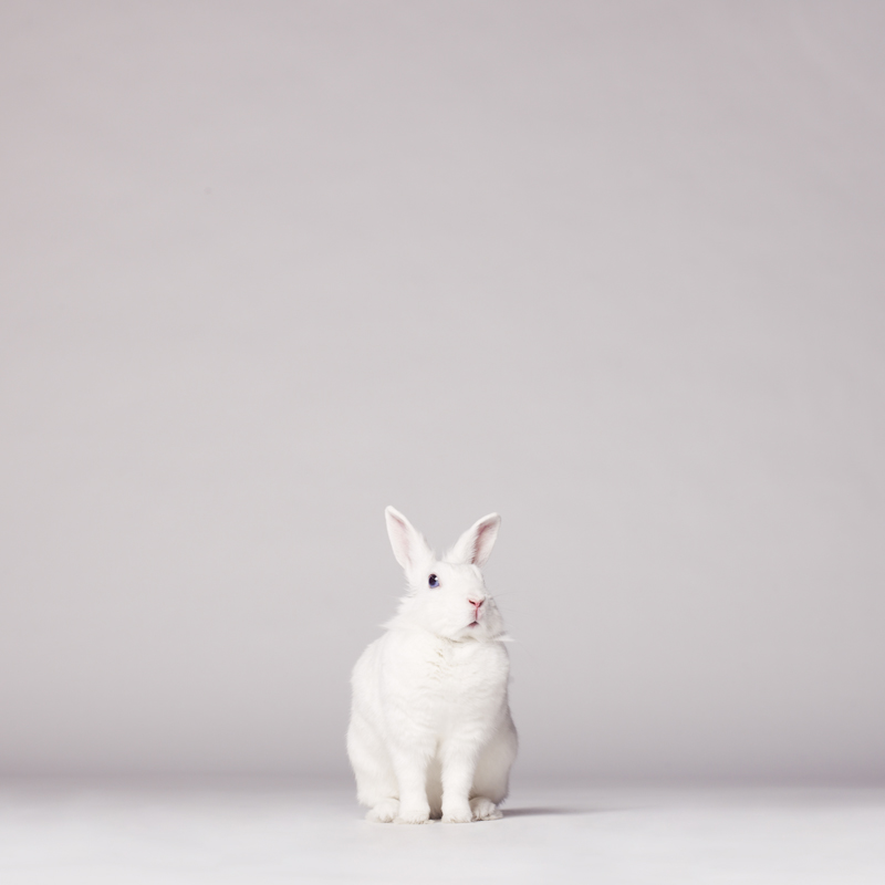Следуй за белым кроликом - Follow the white rabbit / George Mayer