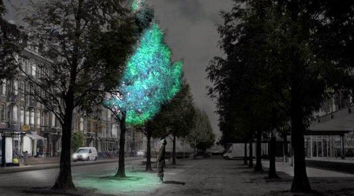 Группа разработчиков решила создать биолюминесцентные деревья с помощью фермента, встречающегося у н