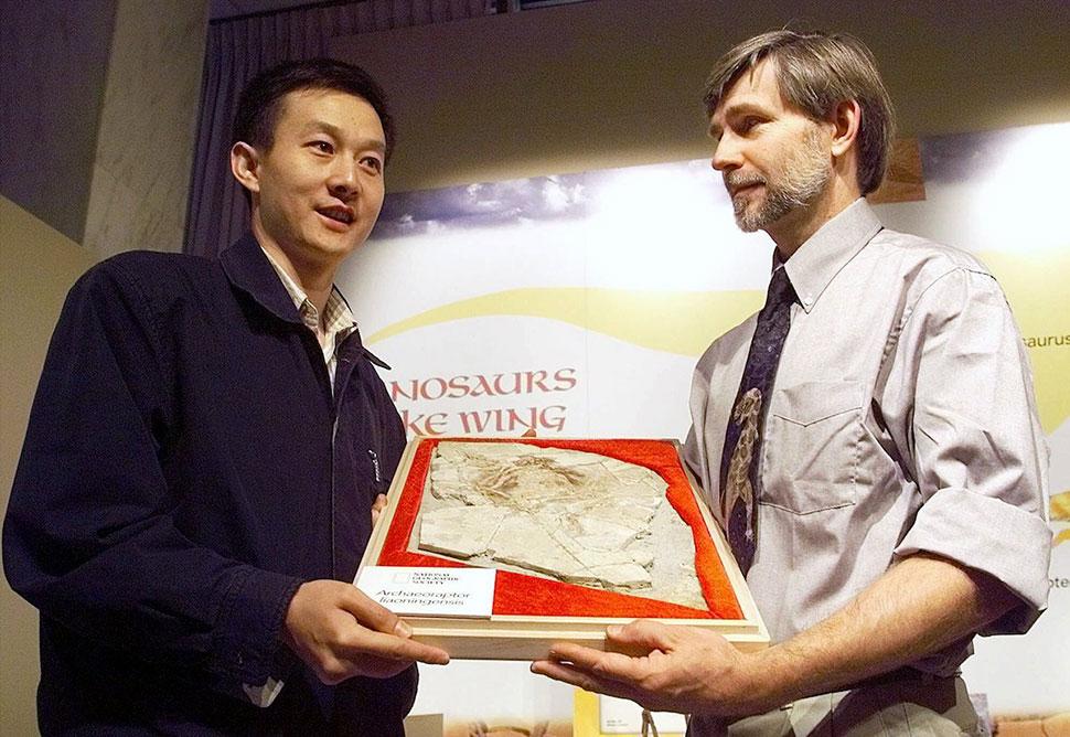 Останки археораптора, 1999 год В 1999 году были найдены ископаемые останки пернатого динозавра — арх