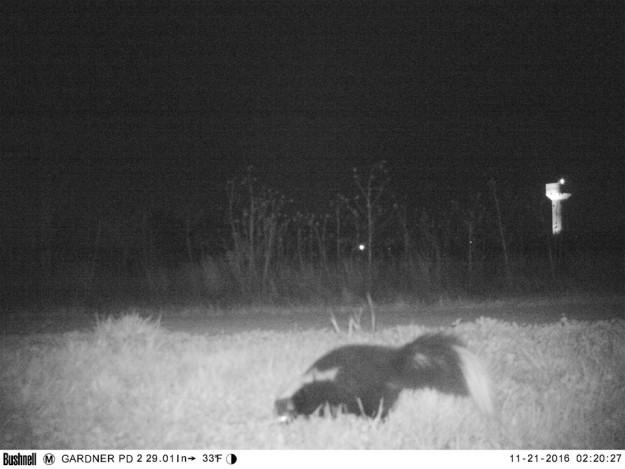 Полиция установила камеру ночного видения, чтобы найти пуму, но ситуация вышла из-под контроля (8 фото)
