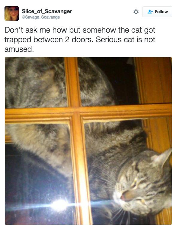«Не спрашивайте как, но кот застрял между двумя дверями. Судя по выражению морды, ему невесело».