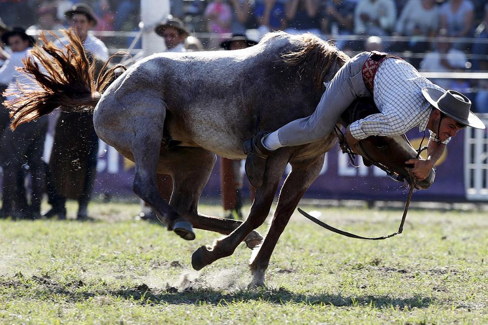 6. А это фотографии с соревнований наездников в Уругвае на «Неделе Криоллы», которая проходит с