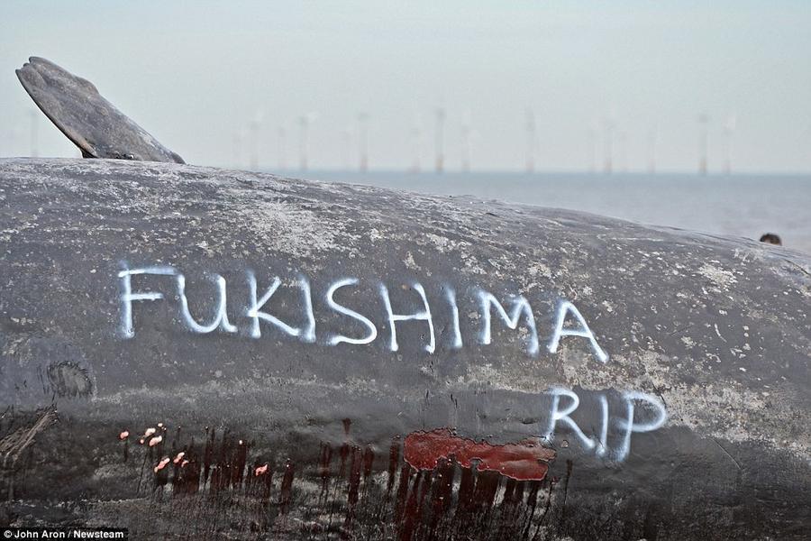 6. Кто-то оставил надписи «Фукусима» «RIP» и «Меня погубил человек» на тушах кашалотов на побережье