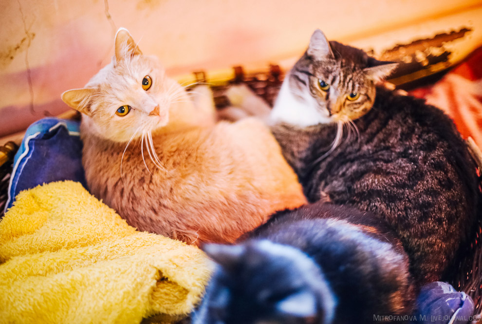 29. Когда ты видишь котёнка, сложно устоять перед его милотой, а вот этим уже повзрослевшим кра