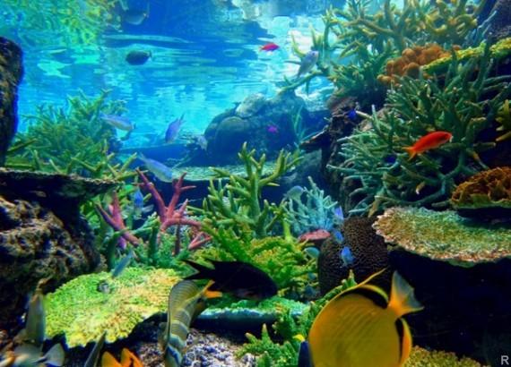 Морские бактерии всостоянии замедлить климатические изменения— Ученые