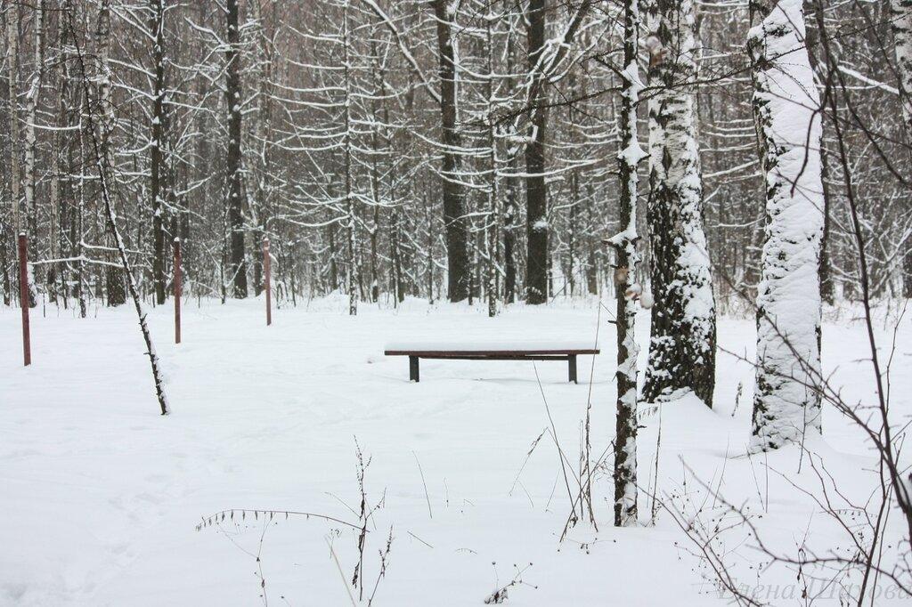 Тимирязевский лес-13.jpg