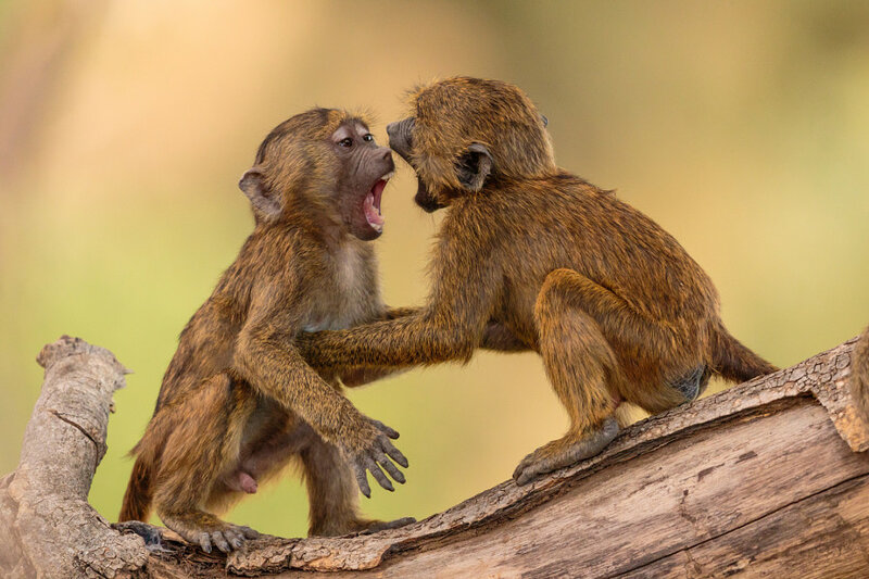 Скажи «Аааааа». Автор фото: Jacques-Andre Dupont
