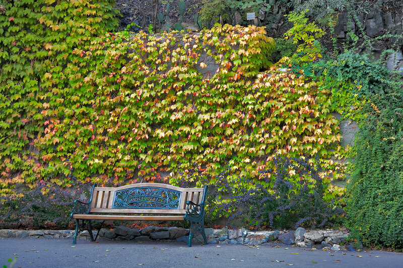 Old bench on a background of yellow grape leaves in a botanical garden in Tbilisi