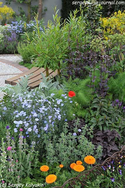 A modern Apothecary Garden (9).jpg