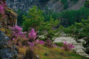 Весна на Катуни.