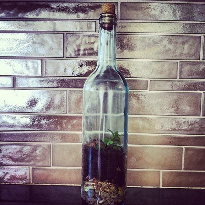 6. Террариум. Прозрачные бутылки или из цветного стекла идеально подойдут для выращивания собственно