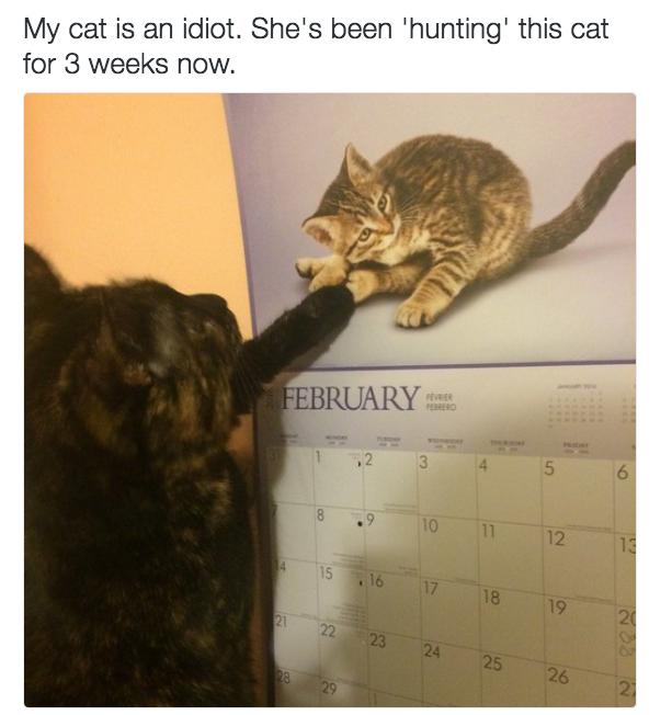 «Мой кот — идиот, он уже три недели охотится за этим котенком».