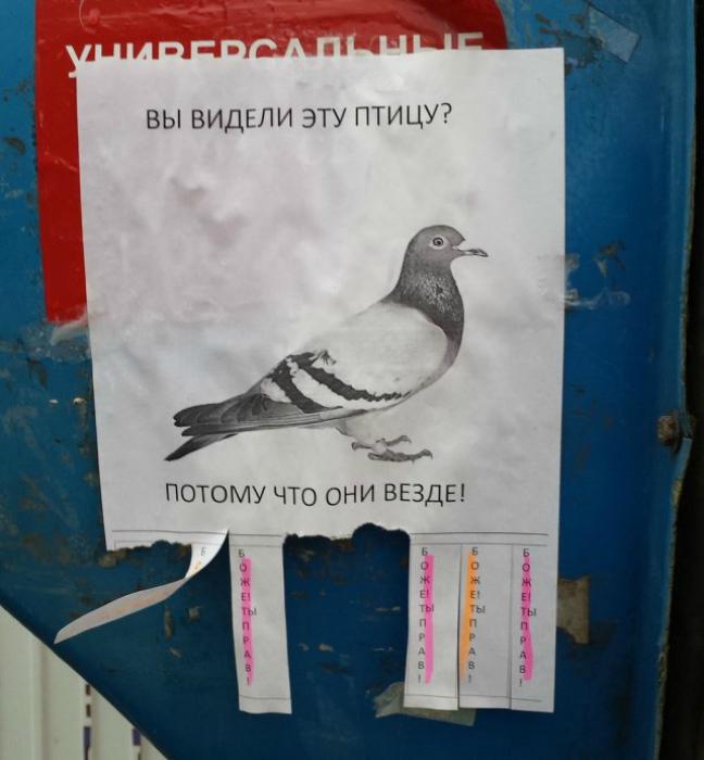 Знакомьтесь - это голубь!