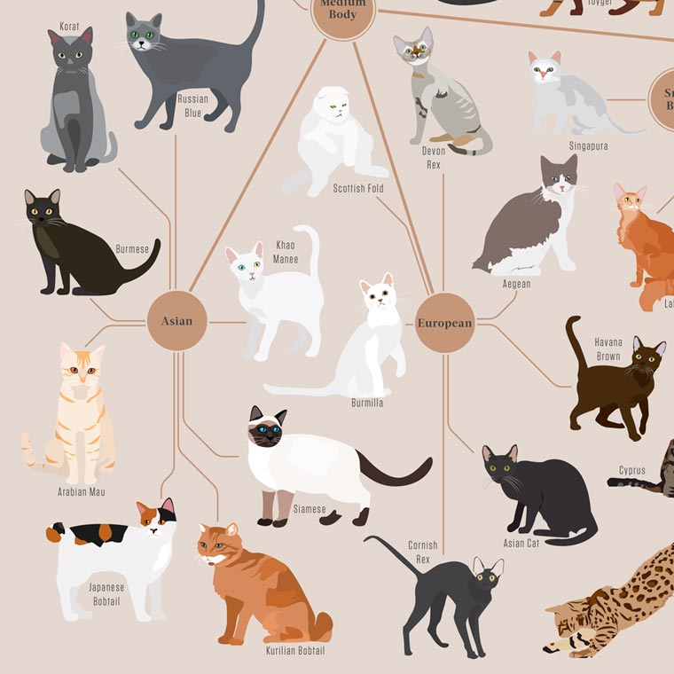 Cats Categorized - Sorting the different cat breeds by types and origins