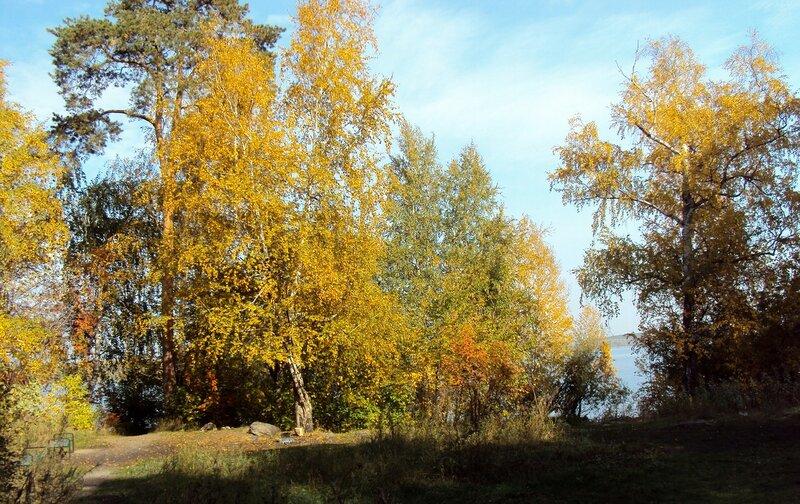 Деревья в золоте у озера Шарташ
