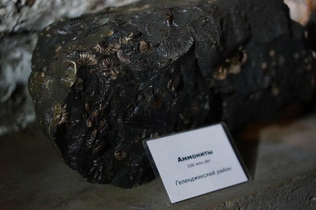 Аммониты. Искусственная Медвежья пещера в Сафари-Парке в Геленджике
