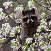 Зверек на дереве