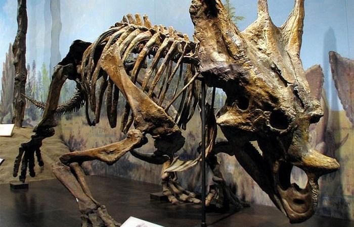 Останки вымерших животных, которые прекрасно сохранились