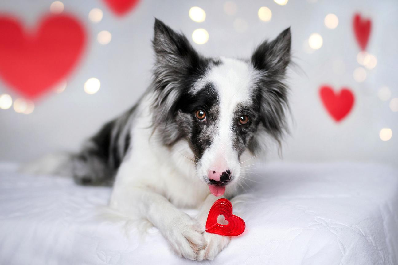 День влюбленных - Valentine's day / Martyna Ożóg