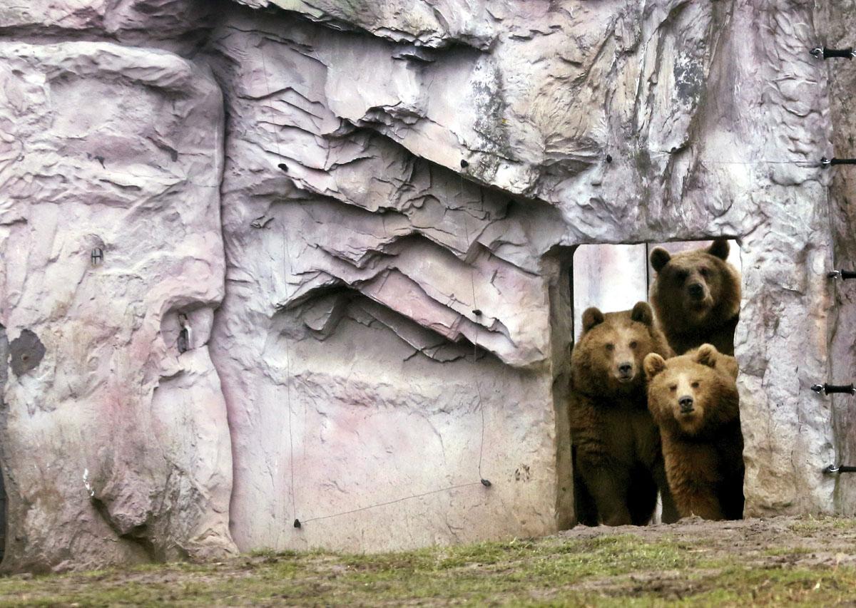 Медведицы Смилия, Альма и Фрида, воспитанницы берлинского зоопарка, увидели что-то блестящее и вкусн