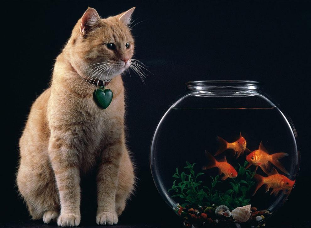 Если бы человек мог быть скрещен с котом, это улучшило бы человека, но ухудшило бы кота. Марк Т