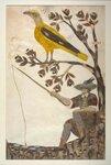 illustrations-anciennes-toutes-en-plumes-400-ans-37-730x1080.jpg
