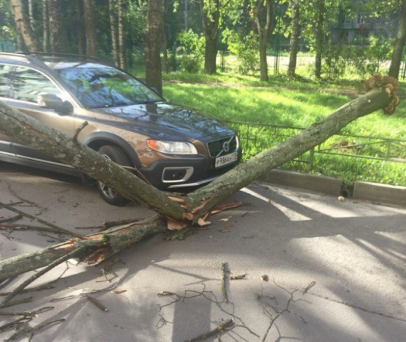 Шторм повалил десятки деревьев вПетербурге