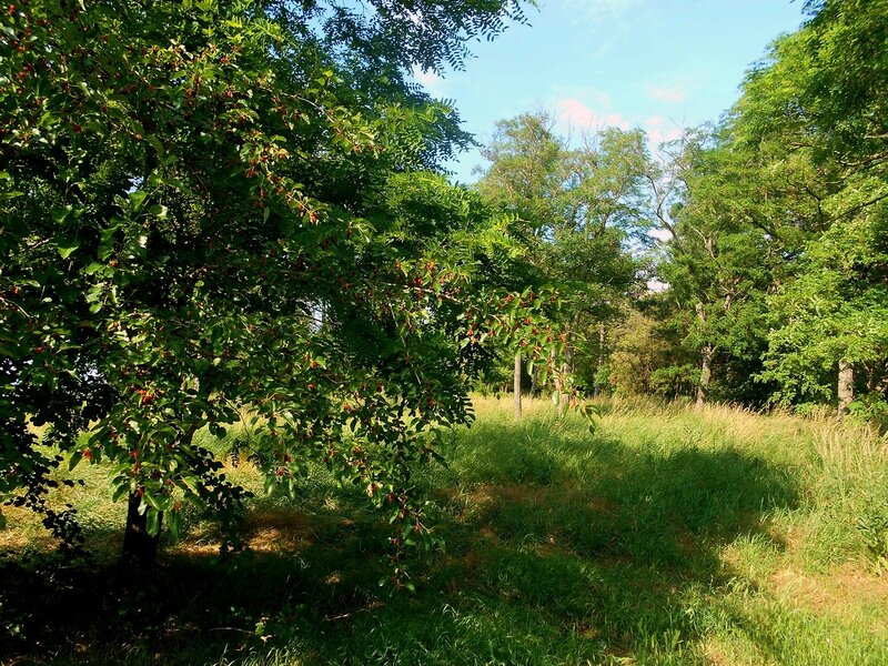 В лесу ... DSCN2689.JPG