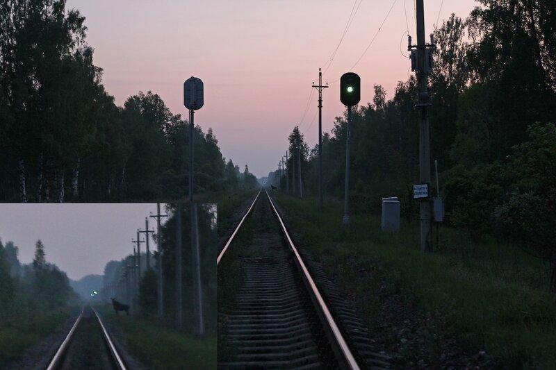 Лось переходит пути в бывшей ржевской горловине станции Помельница, на закрытом переезде. Вид на Ржев
