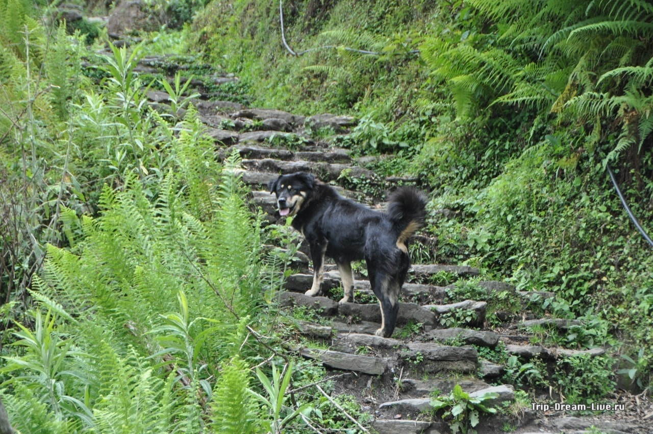 Собака-провожака