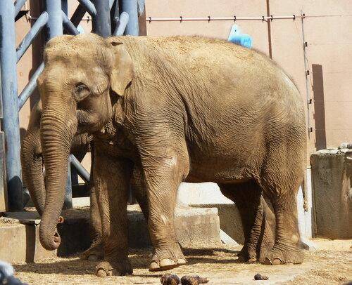 20 июня - Всемирный день защиты слонов в зоопарках и цирках